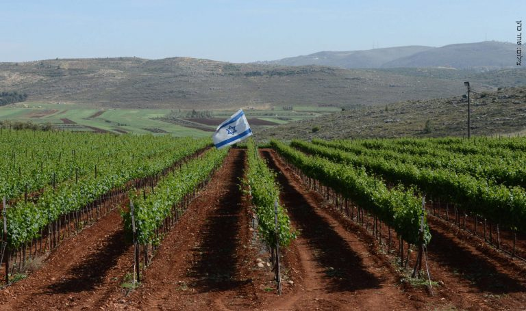 כרמים-בעמק-שילה-שחר-כהן